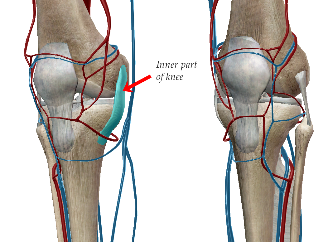 medial-collateral-ligament